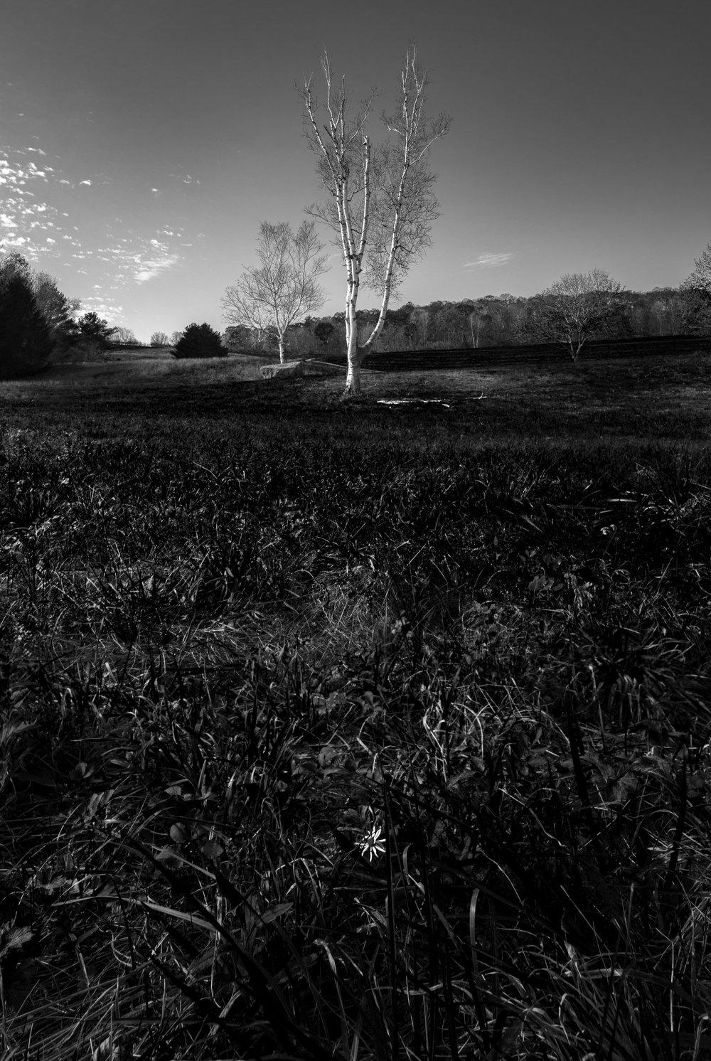Field BW.jpg