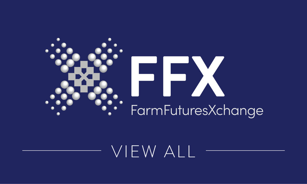 FFX Partners-01.jpg