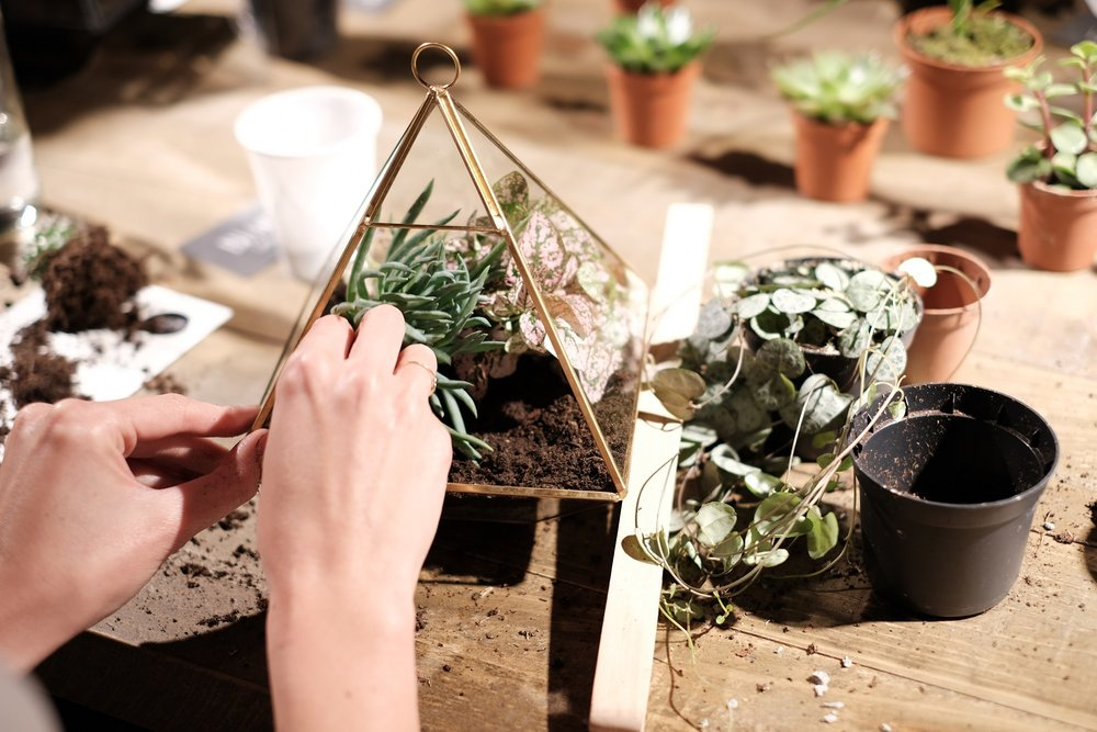 Terrarium workshop.jpg