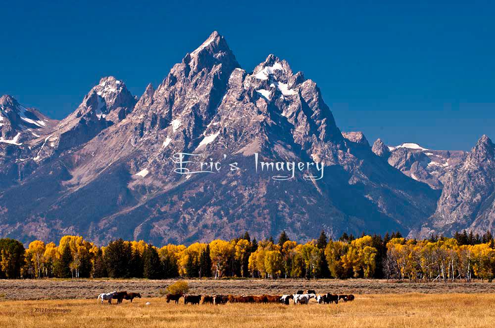 Grand-Teton-Horses.jpg