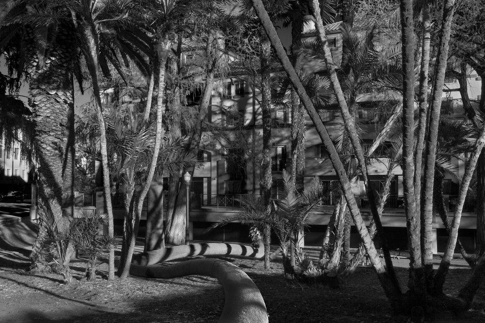 "Jonathan Chacón,  Palm Trees, 20I5, Archival Inkjet Print 16"" X 20"""