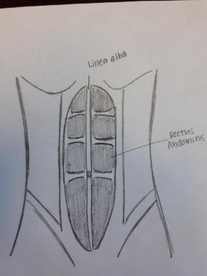 abdomen pic.jpg