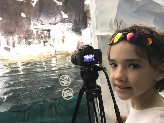 Filming penguins at Seaworld Orlando