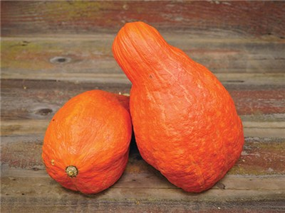 Buffalo Creek Squash