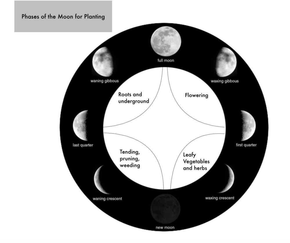 lunar planting #2.png