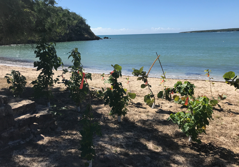 Caring for the Puerto Rican Ecosystem