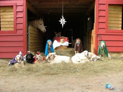 dogs-nativity