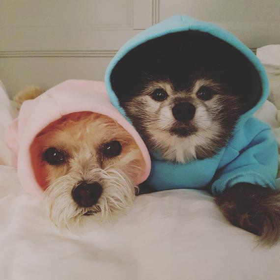 Dog Sweatshirt.png