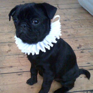 SHAKESPEAREAN PET RUFF - $28