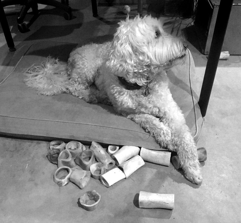dog-w-bones-petegorskyIMG_0856.jpg
