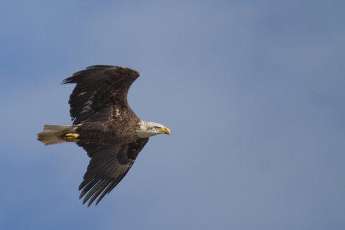 Bald Eagle Collection Denise Worden Photography