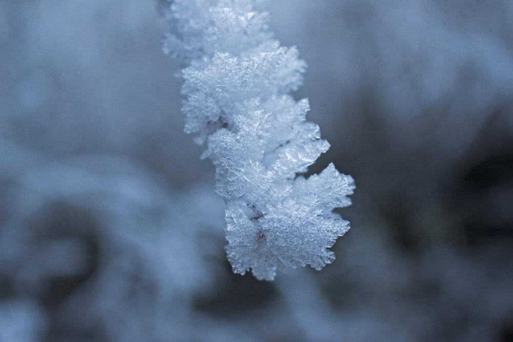 Galaverna - Lo spettacolo d 'inverno