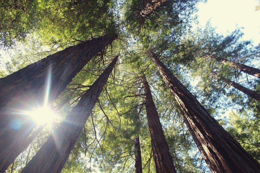 Treesa nd sunlight.jpg