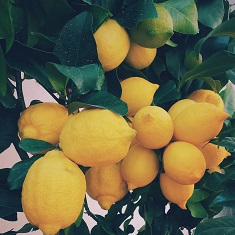 ernest-porzi-19106-unsplash - Lemons - smaller.jpg
