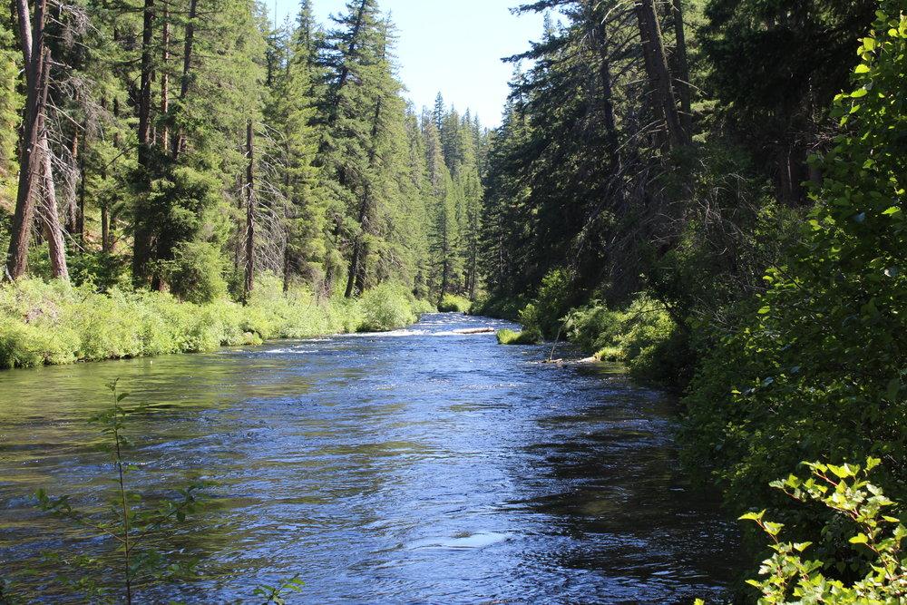 Metolius River in Central Oregon