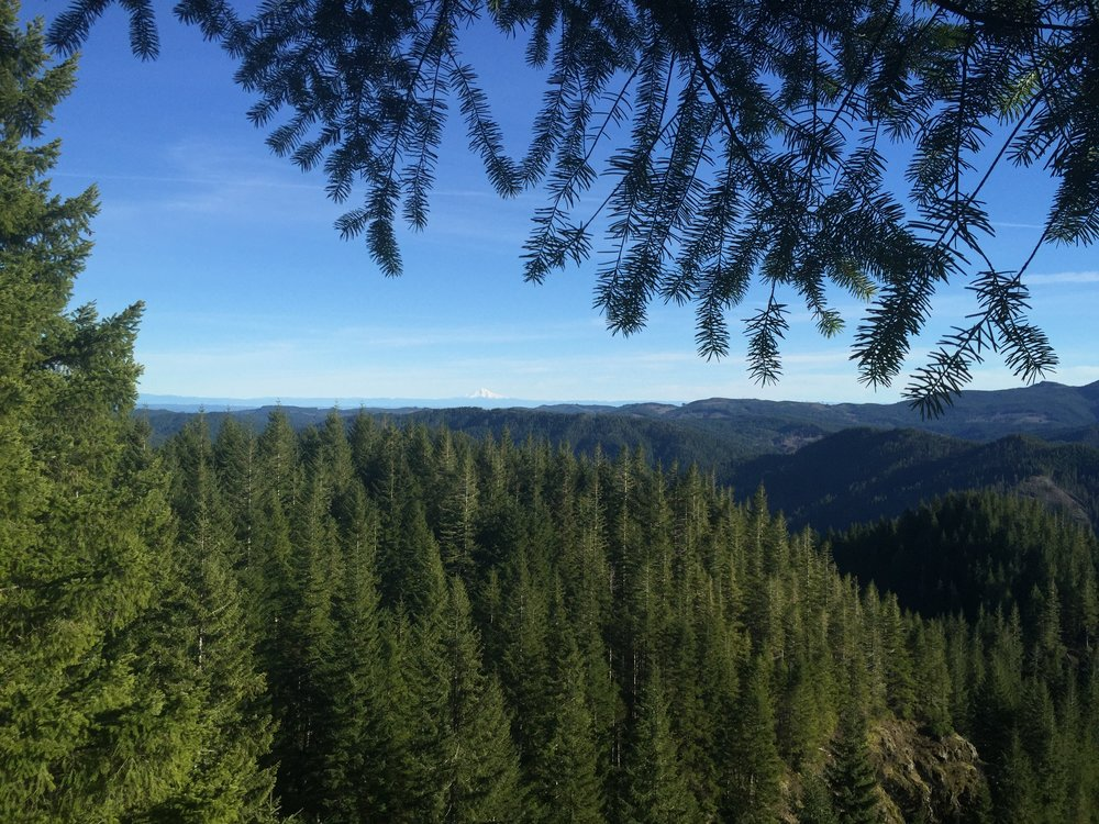 Forest Land Transfer Program - 2019 Legislative Session