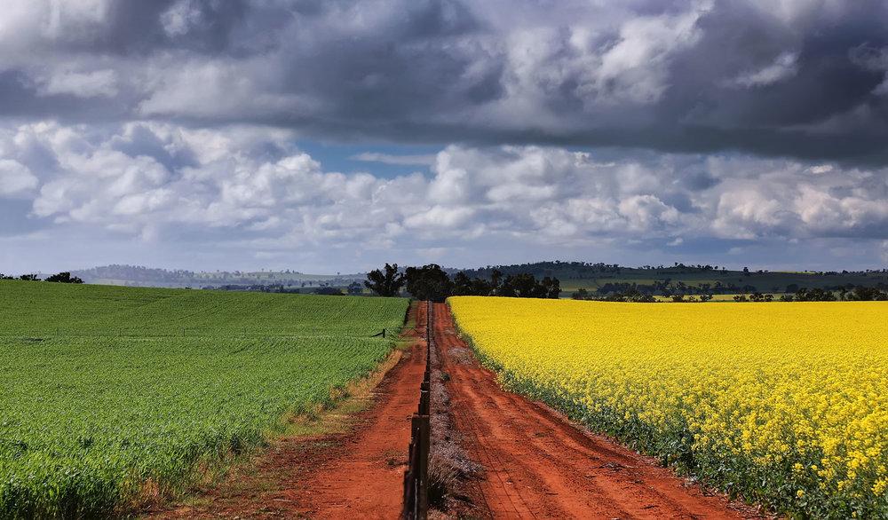0303---Fields-of-Green-and-Gold,-Annette-Blattman.jpg