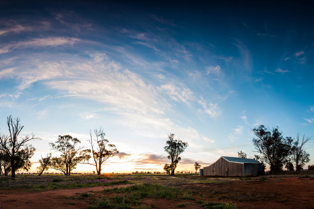 0222---Shearing-Shed-at-Sunset,-Holly-Gray.jpg
