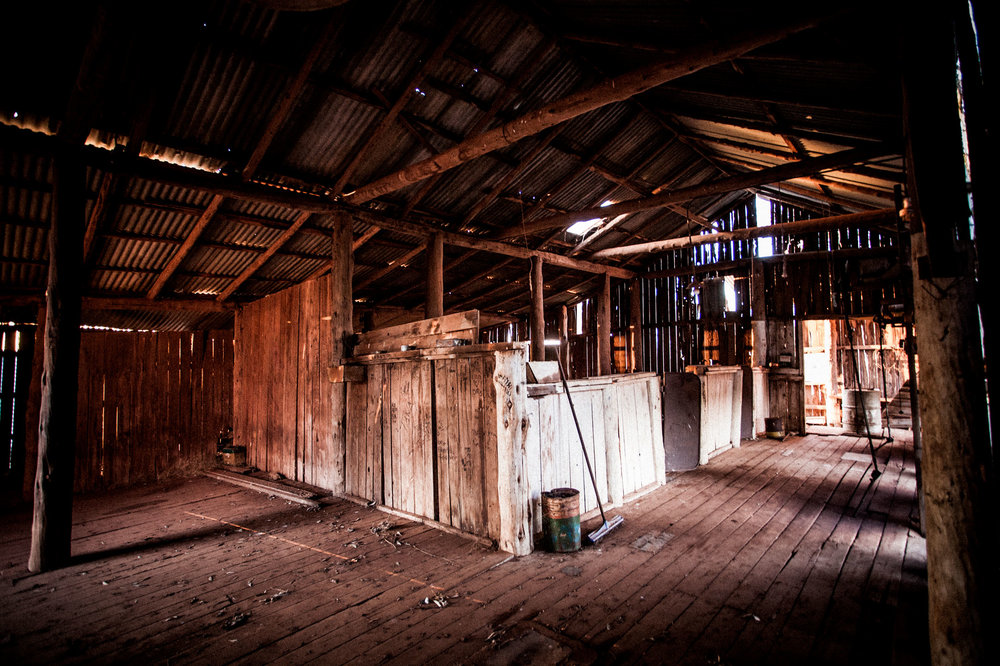 0223---The-Old-Shearing-Shed,-Matt-Gray.jpg