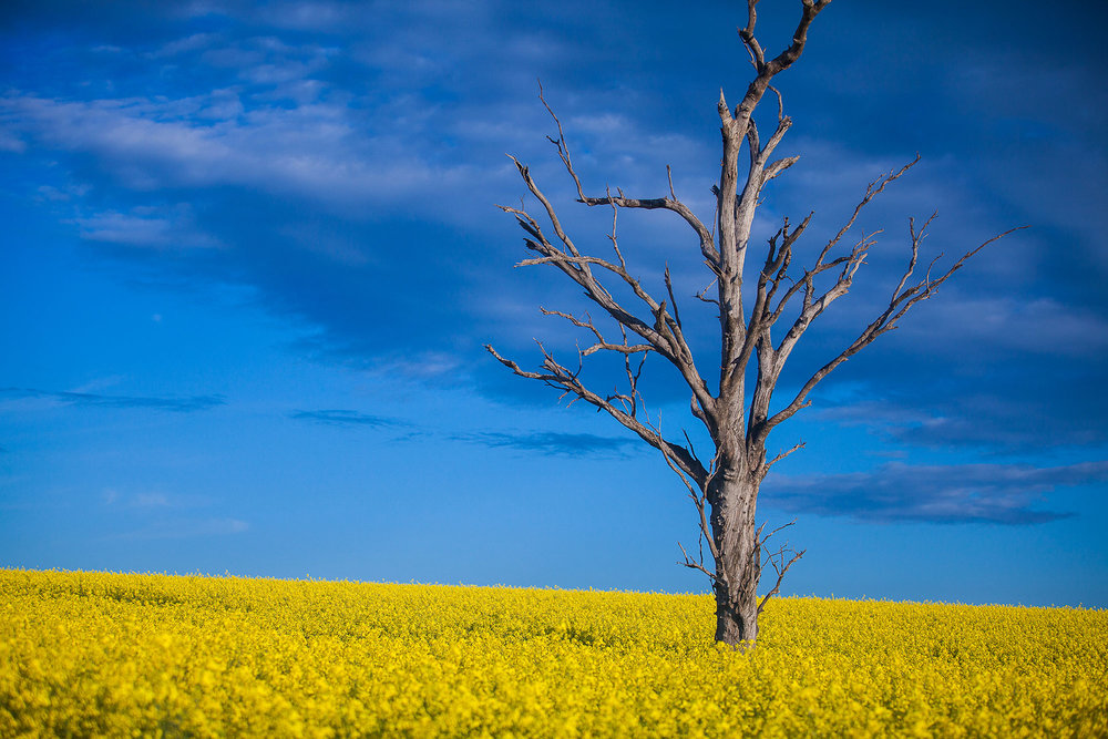</strong><a href=/canola-trail>Canola Trail →</a>