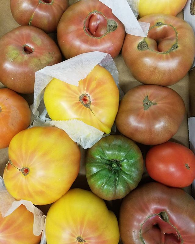 🔥🔥🔥 😍😍😍 🍅🍅🍅 #tomatoes #summer #july #edibledc #instafood #acreativedc #heirlooms #organic #pagrown