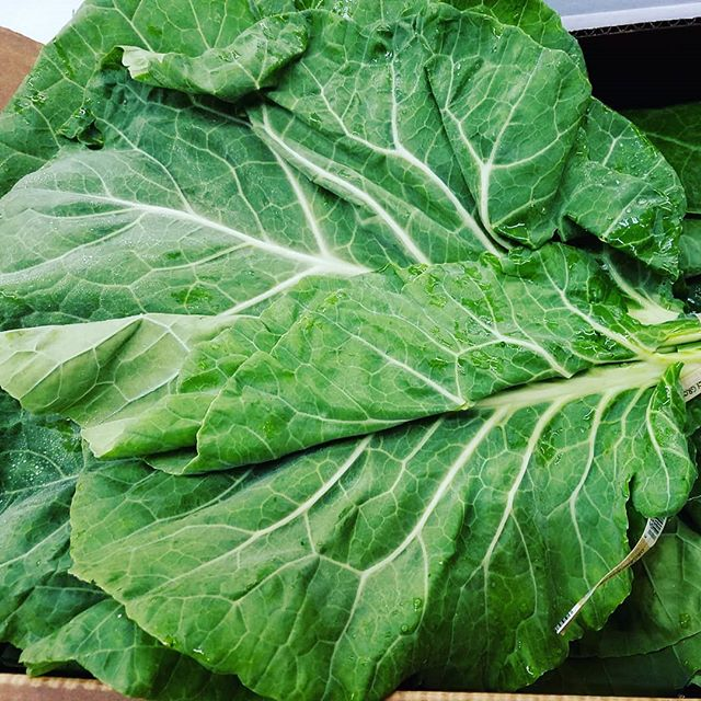 While we wait for summer to approach peak season we are enjoying dark leafy greens for days 🌱 #edibledc #organic #pagrown #summer #eatthis #greens #healthy