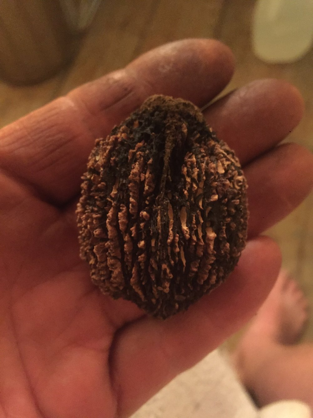 Ohio Black Walnut