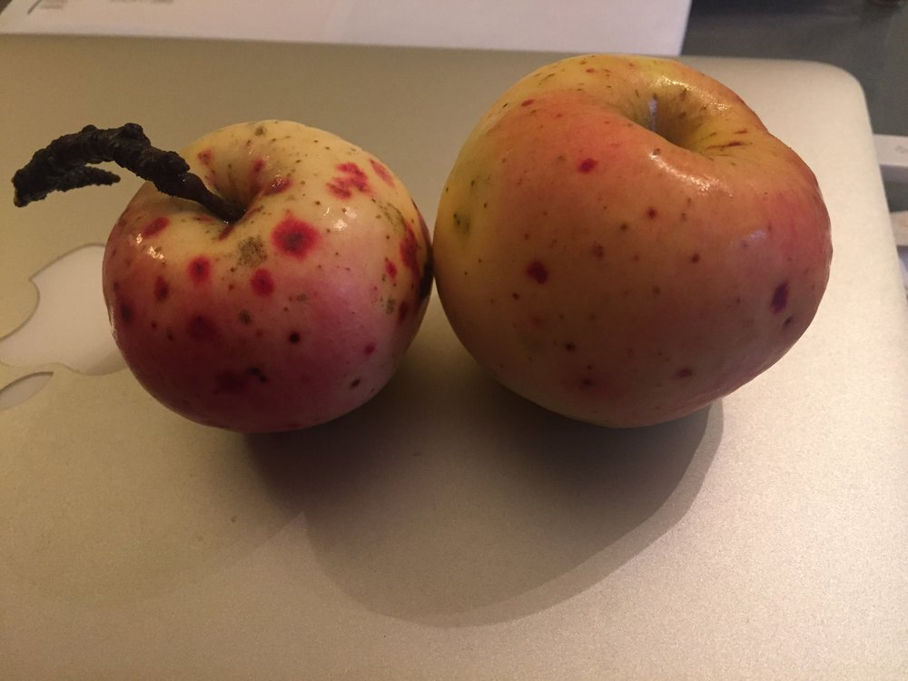 Yellow Red Dot Apple