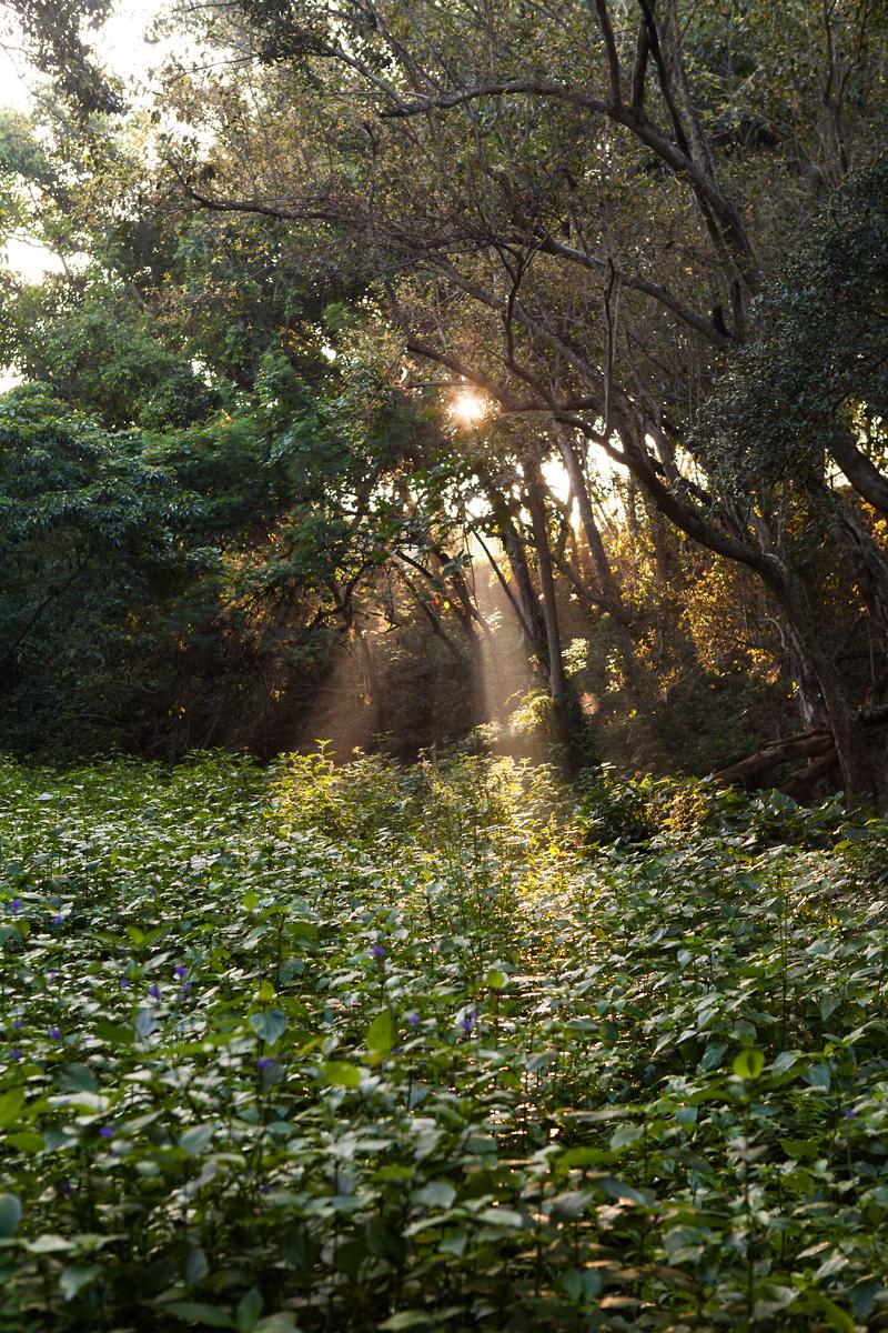 heavenmcarthur-inhabit-land-hawi-373-web.jpg