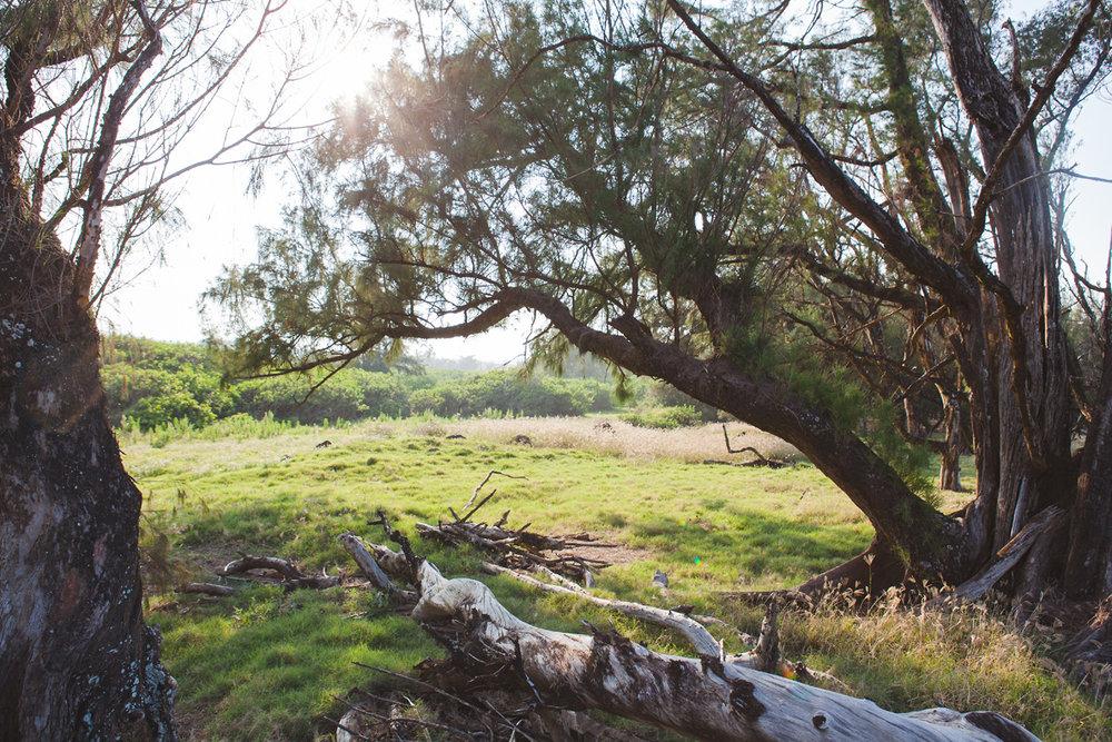 heavenmcarthur-inhabit-land-hawi-298-web.jpg