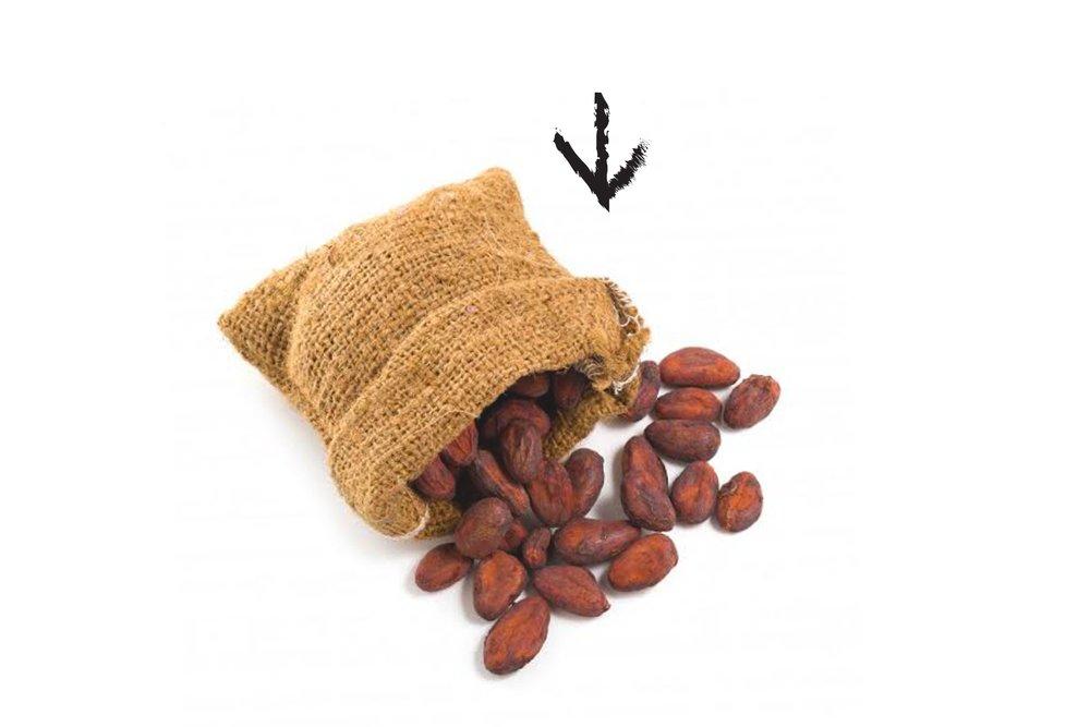 cacao+seeds.jpg
