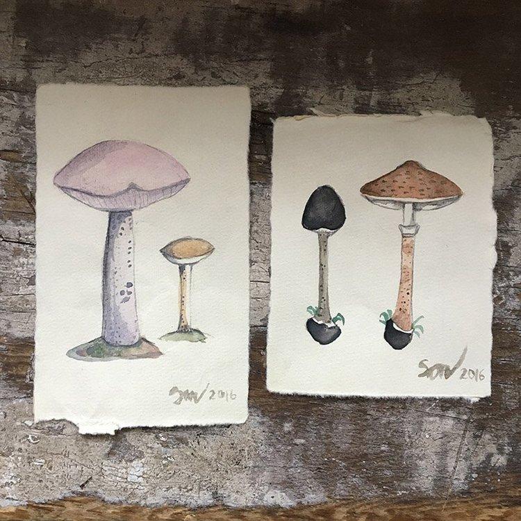 Children's Botanical & Mushroom Studies in Watercolor