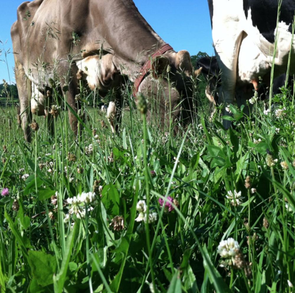 chaseholm farm creamery -