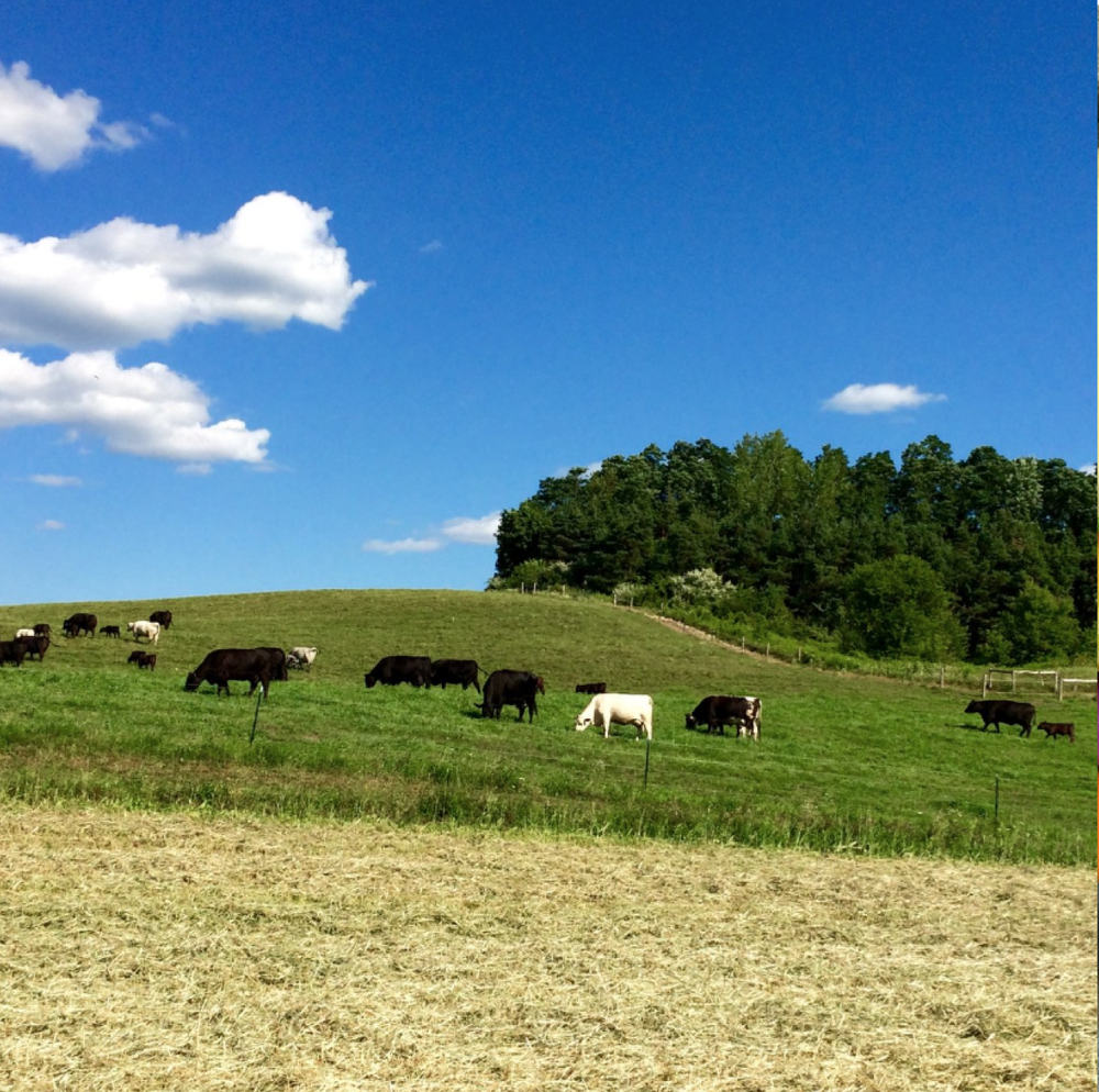 roxbury farm -