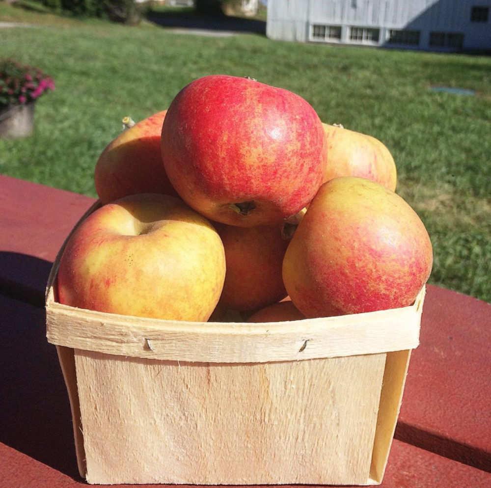 scott farm orchard -