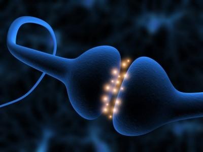 synapses.jpg