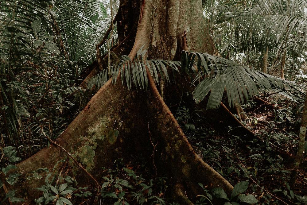 Peru_Pinewood_00008.jpg