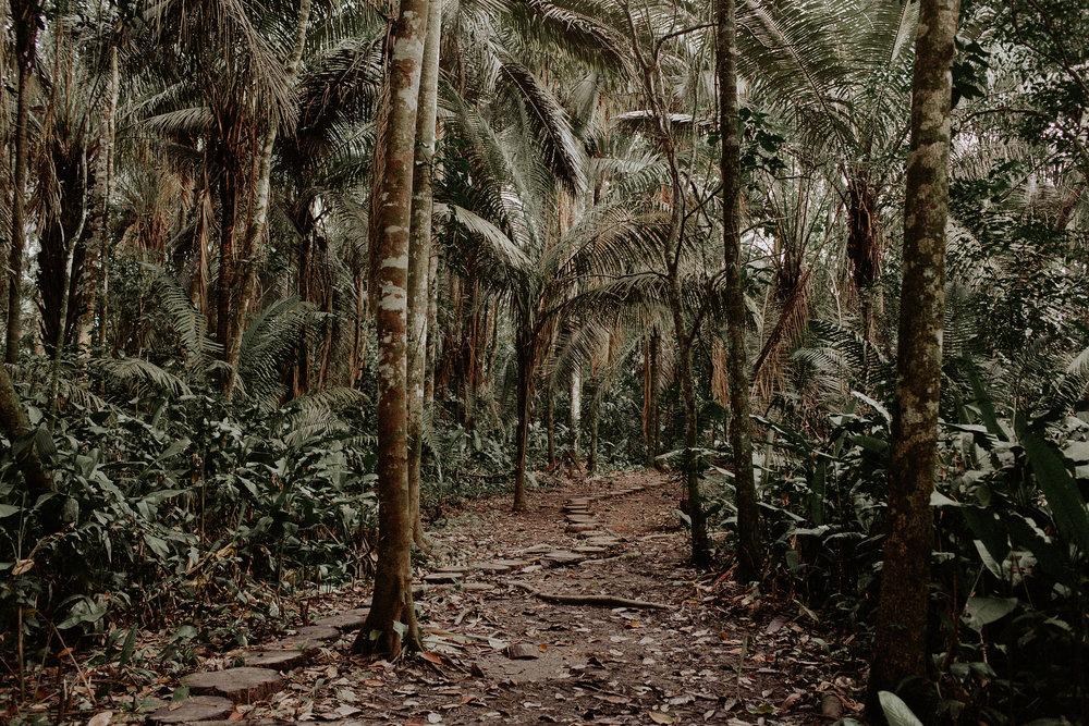 Peru_Pinewood_00009.jpg