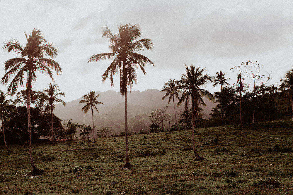 Dominican Rep_Pinewood_00004.jpg