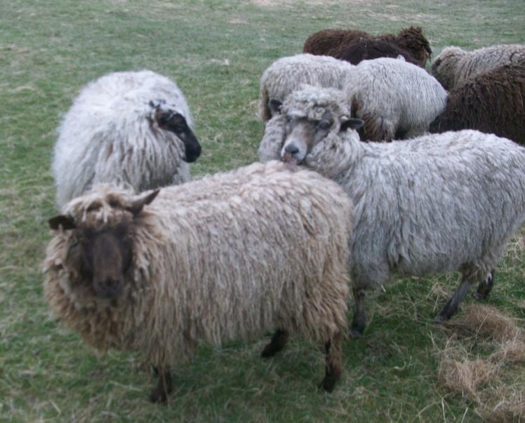 lambs-040 (1).jpg