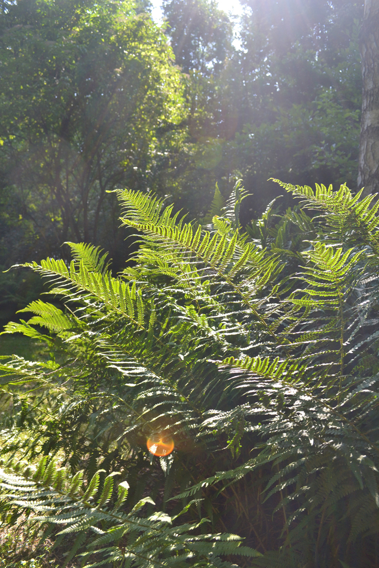 ferns flare | Inspire Styling journal