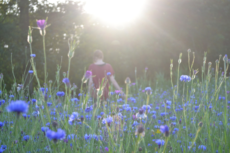 sunset in a cornflower field - Inspire Styling journal