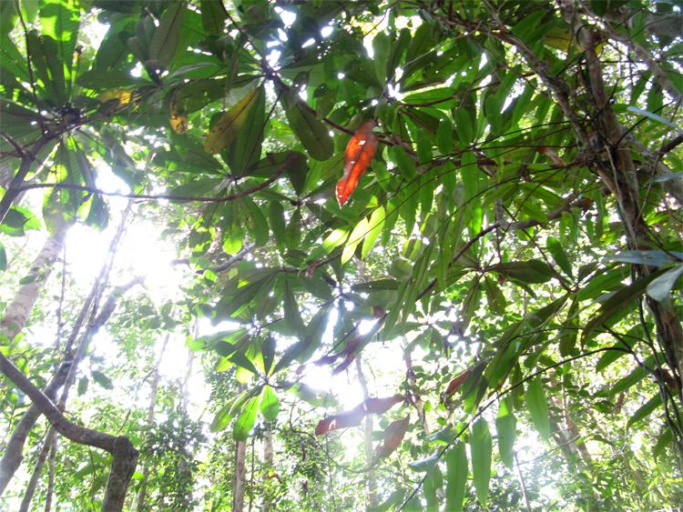 Borneo rainforest - Anne van Midden