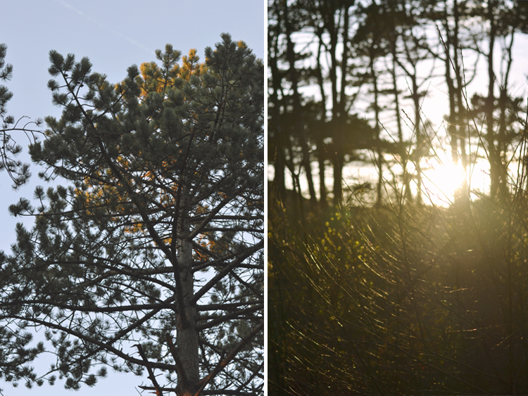 golden hour between the trees | Inspire Styling blog