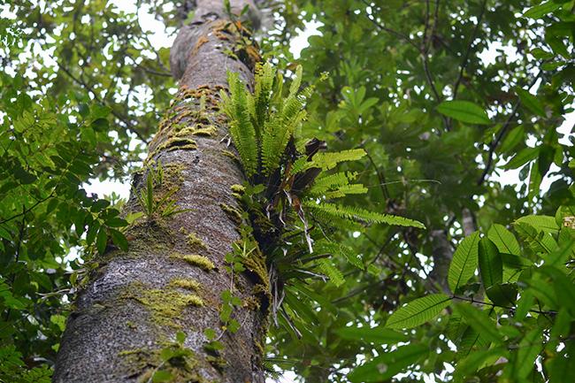 Braulio Carillo rainforest, Costa Rica © Anne van Midden