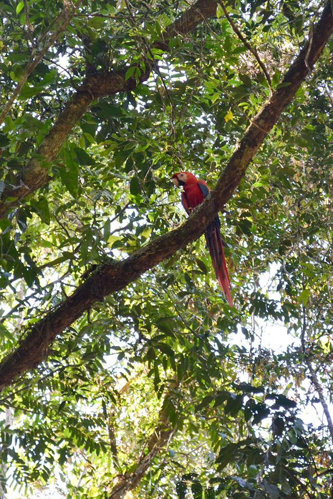 Costa Rica © Anne van Midden