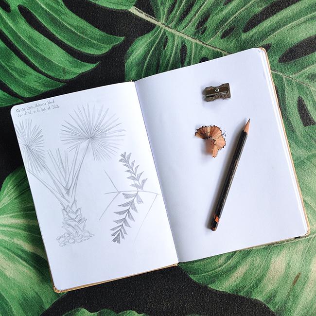 sketching Costa Rica © Anne van Midden