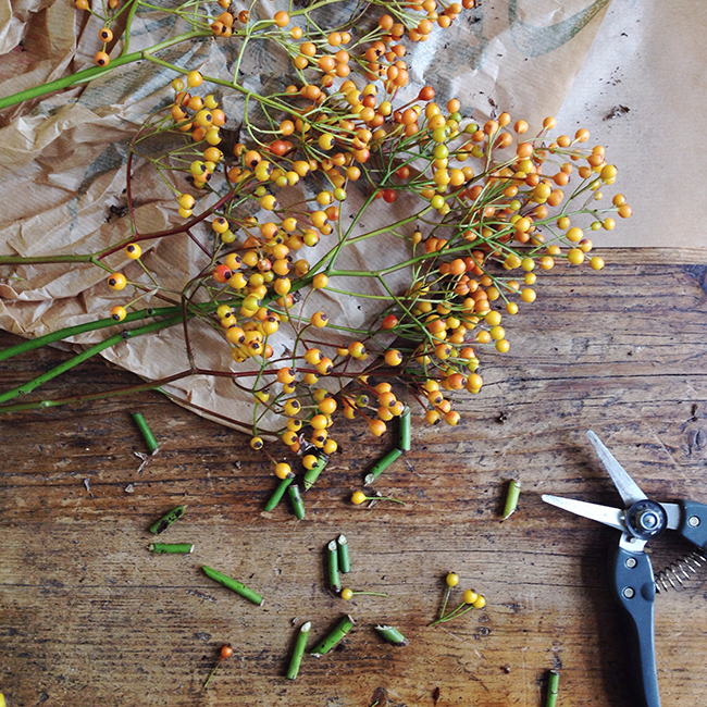autumn berries - annevanmidden on Instagram