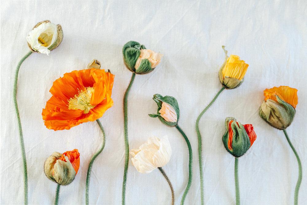flower frenzy - oak&fir - inspire styling