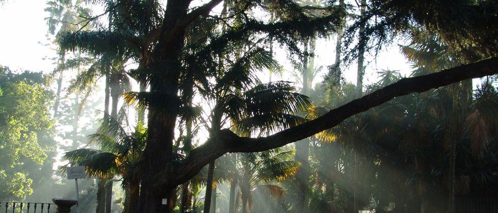 jardin-botanique-lisbonne-portugal-expatrie-jardim-botanico.jpg